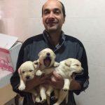 Cuccioli Labrador 2018 veneto